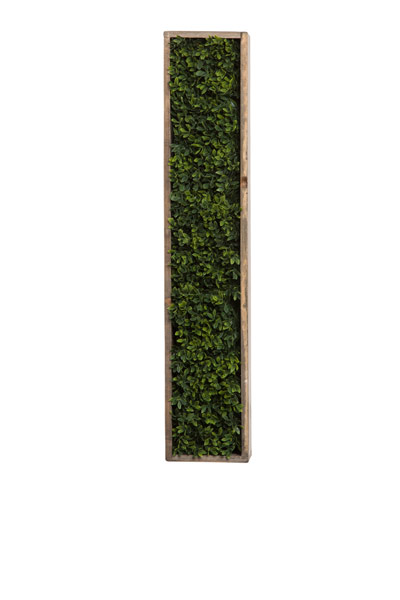 BOXWOOD IN NARROW HANGING WOOD PLANTER