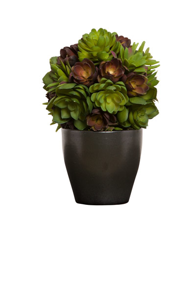 SUCCULENT BALL IN BLACK POT
