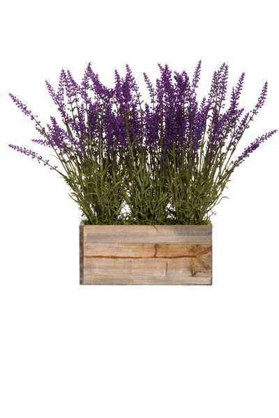 LAVENDER IN SM WOODLAND PLANTER