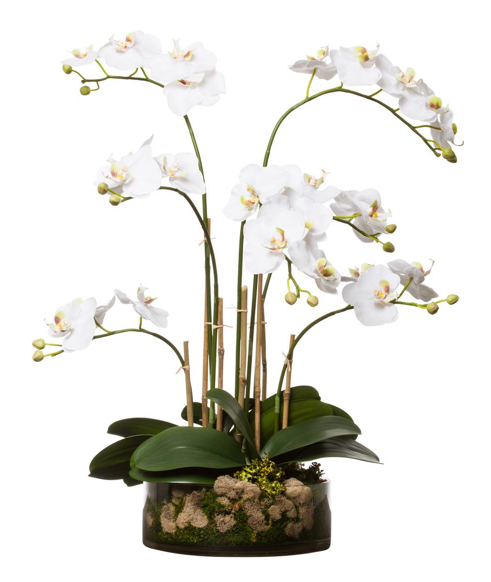 WHITE PHAL IN GLASS BOWL