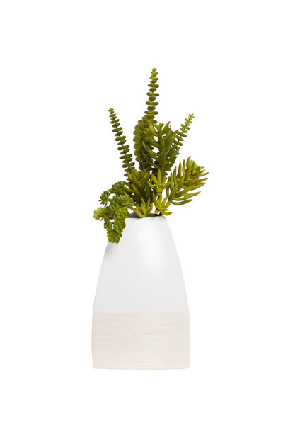 SM SNAKE GRASS/SUCCULENT IN WHITE POT