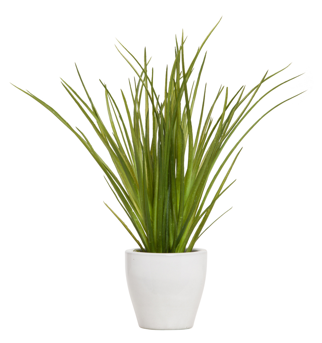 GRASS IN WHITE POT