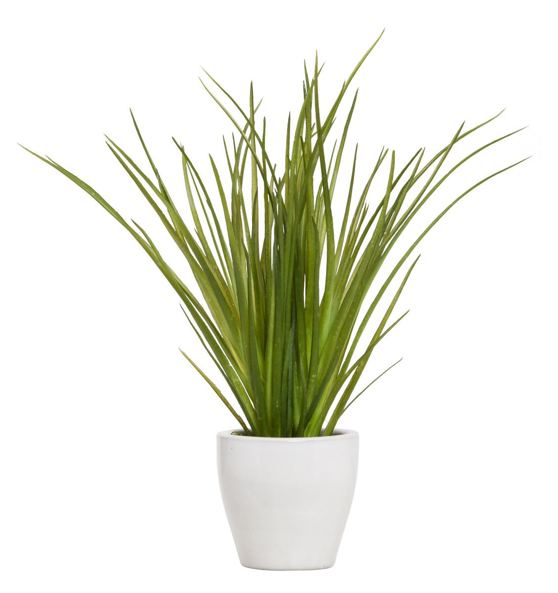 GRASS IN WHITE POT