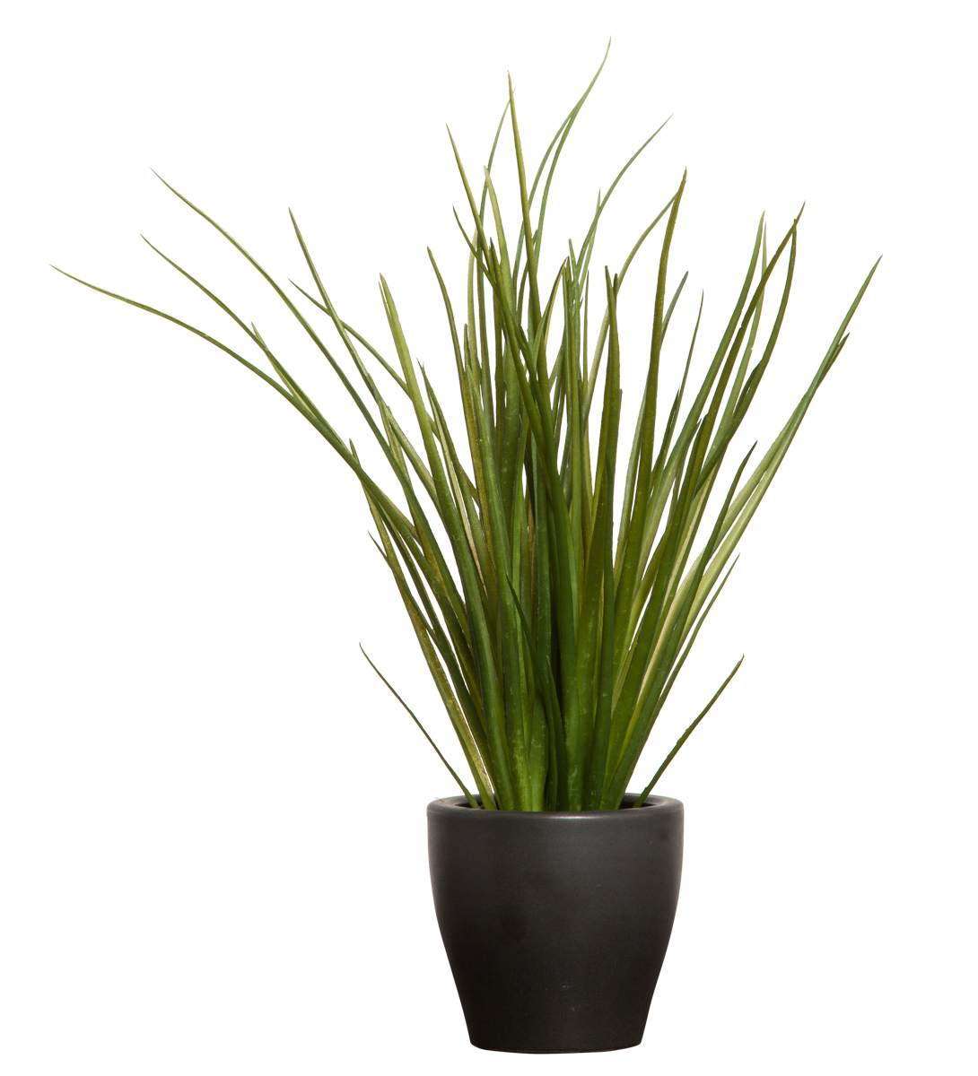 GRASS IN BLACK POT