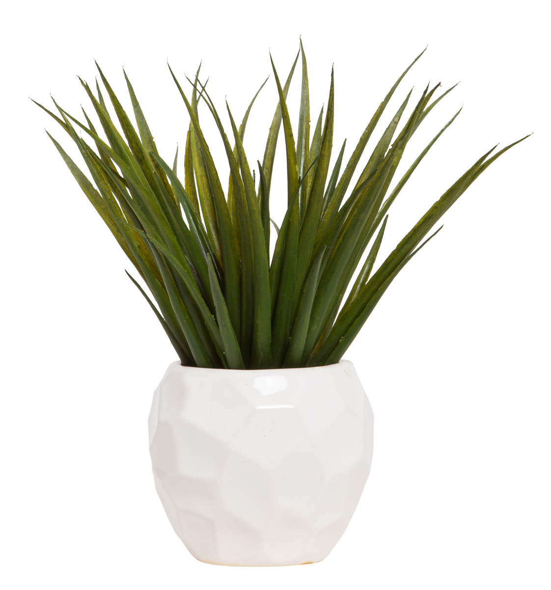 SUCCULENT IN WHITE CHIP POT