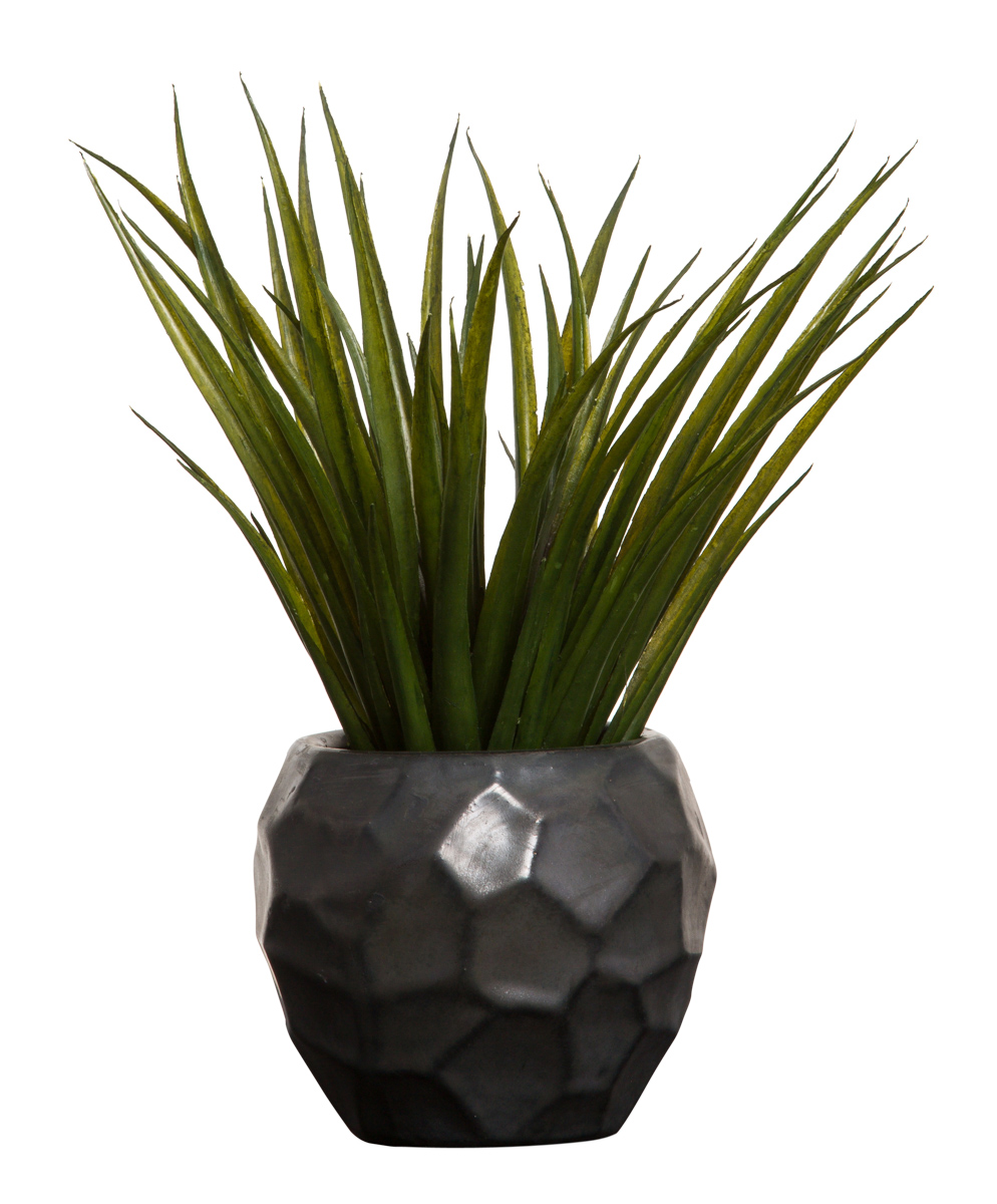 SUCCULENT IN BLACK CHIP POT
