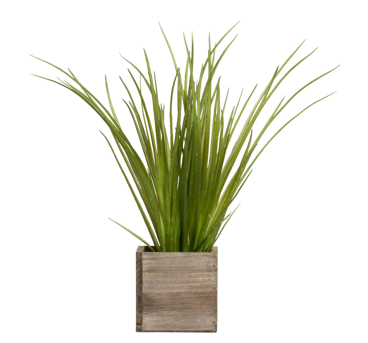 GRASS IN SMALL WOOD BOX