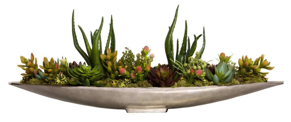 MIXED SUCCULENT/PROTEA IN SILVER BOAT