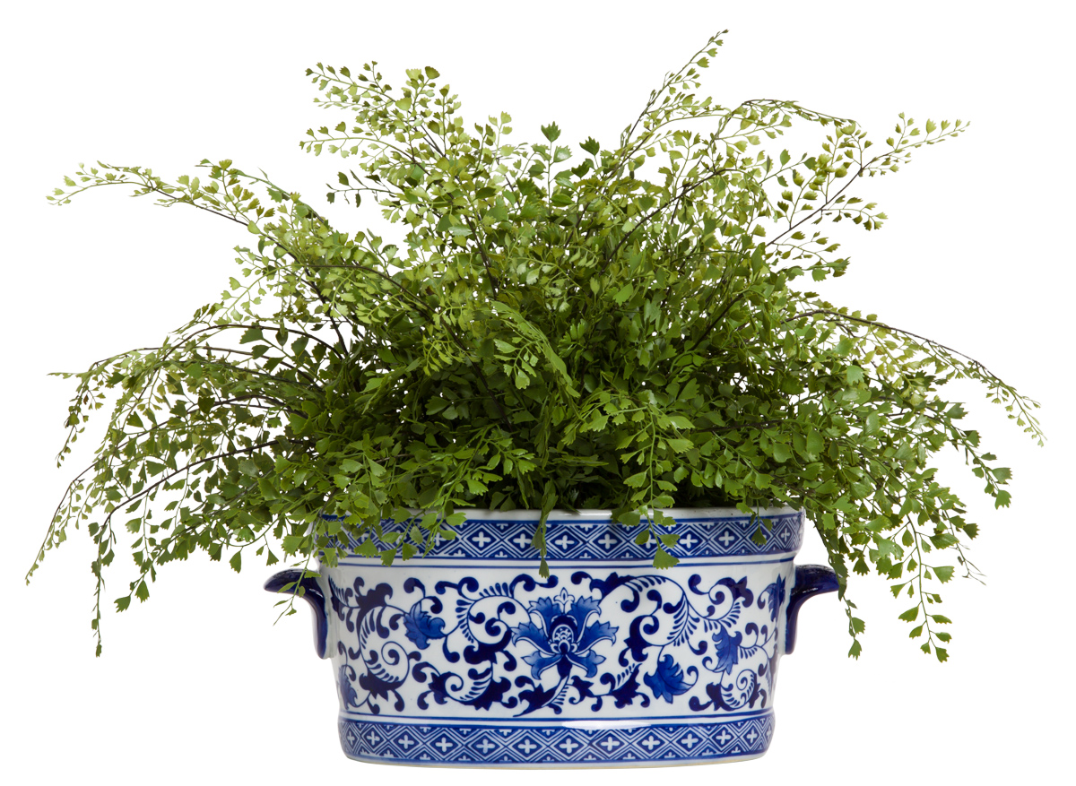 MAIDEN HAIR FERN IN BL/WHT POT
