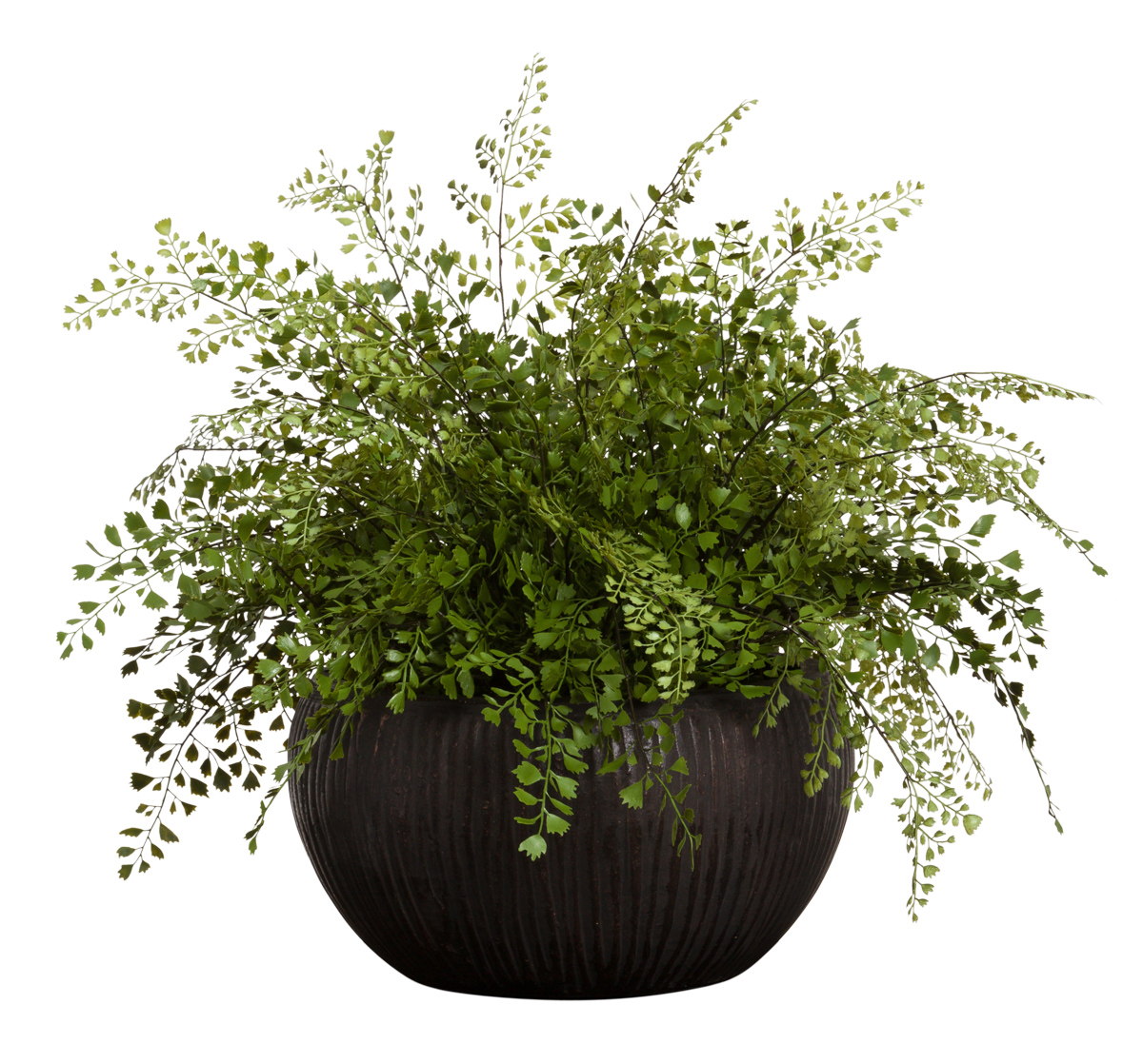 MAIDEN HAIR FERN IN BROWN POT
