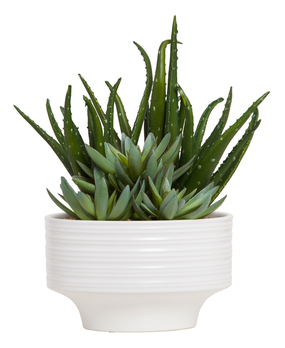 ALOE/SUCCULENT IN WHITE RIBBED POT