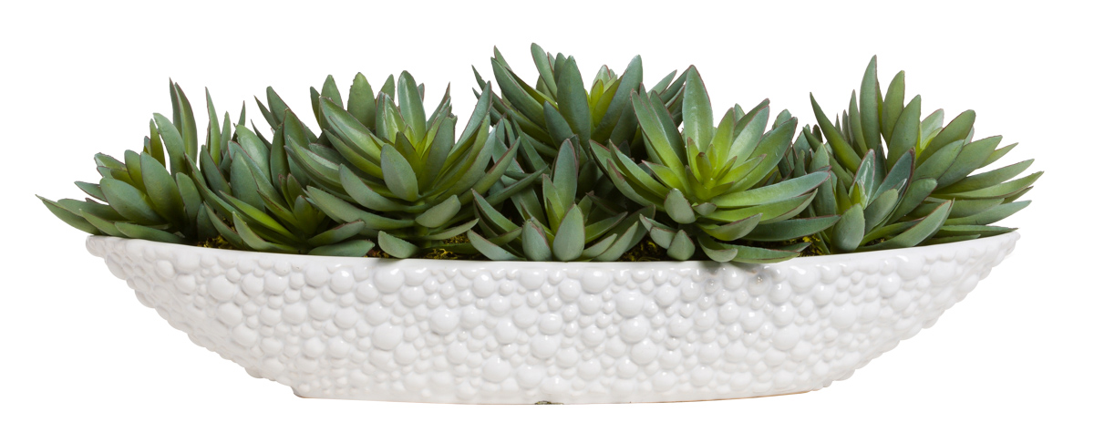SUCCULENTS IN LRG WHITE OVAL POT