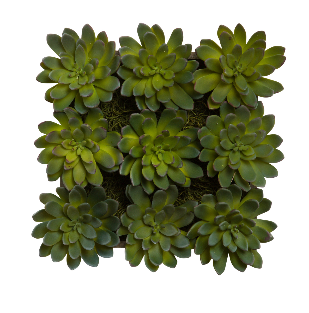 Succulent In Wall Hanging Box Lux Art Silks