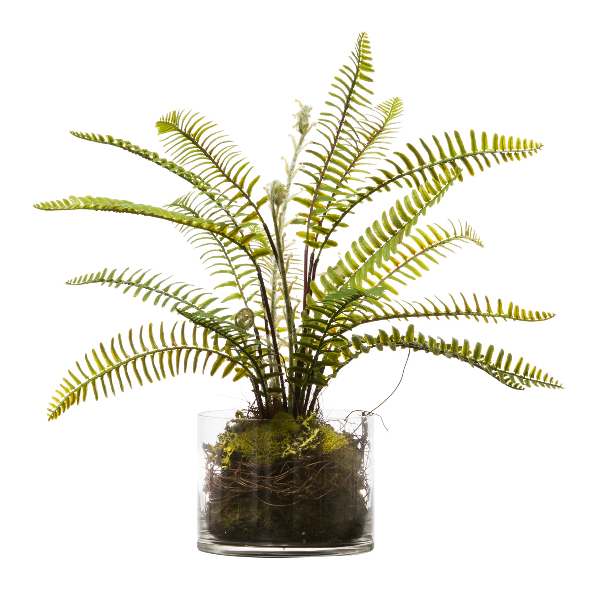 WOODLAND FERN IN GLASS CYLINDER