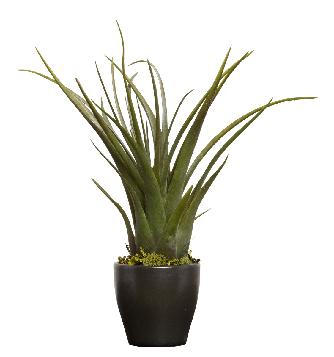 LG TILLANDSIA IN BLACK POT