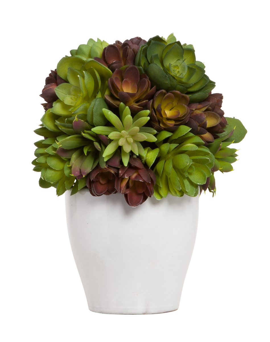 SUCCULENT BALL IN WHITE POT