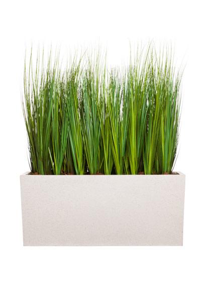 4.5' GRASS IN WHITE PLANTER BOX