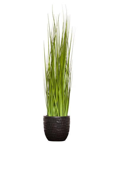 GRASS IN MATTE BLACK METALIC POT