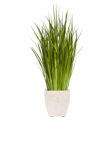 GRASS IN SQUARE POT