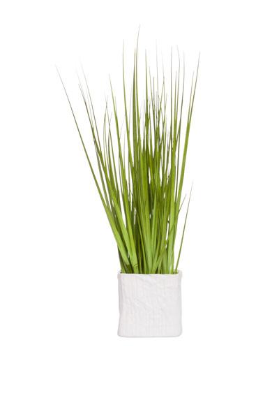 GRASS IN SMALL SQUARE POT