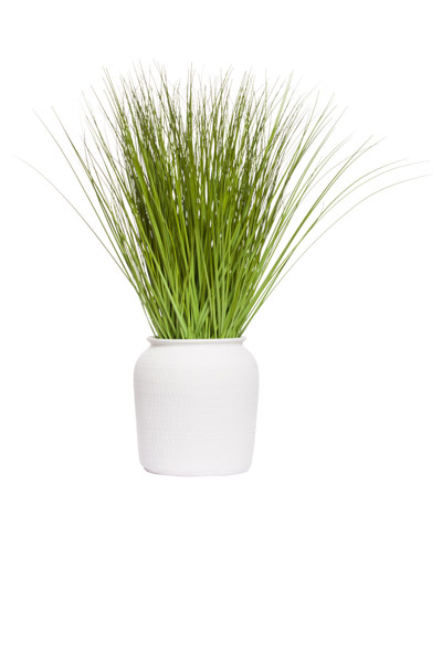 GRASS IN MATTE WHITE POT