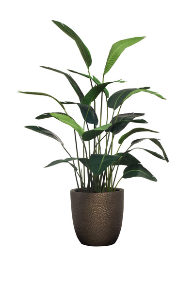 6' DELUXE TRAVELERS PALM/BASKET