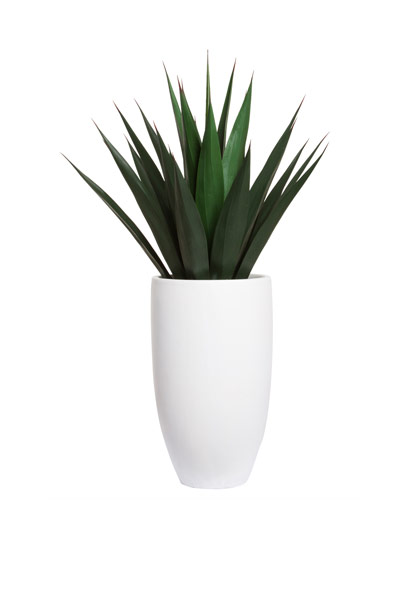 AGAVE IN WHITE TALL ROUND POT