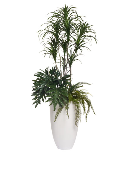6.5' DRACENA COMBINATION IN TALL WHITE POT