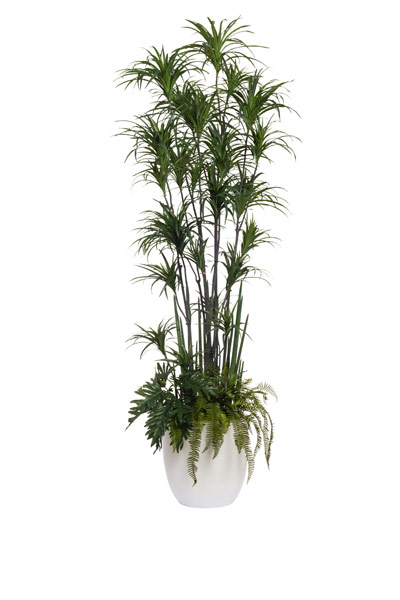 10' DRACENA COMBINATION/BASKET