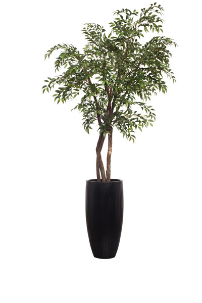 8.5' SMILAX IN TALL BLACK RIBBED POT