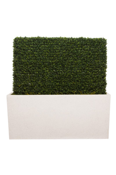 3.5' MINI BOXWOOD HEDGE IN WHITE TERRAZZO PLANTER
