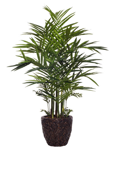 7' DELUXE KENTIA PALM/BASKET