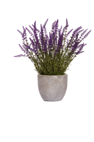 LAVENDER IN SMALL ROUND POT