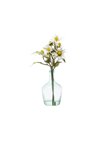 WHITE RUDBECKIA WATER LIKE