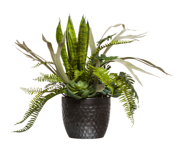 Staghorn Snake Plant Mixed In Black Pot Lux Art Silks