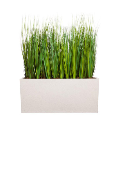 4.5' GRASS IN WHITE PLANTER BOX