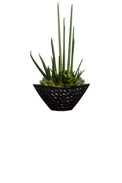 ALOE/SUCCULENT IN BLACK DIMPLE BOAT