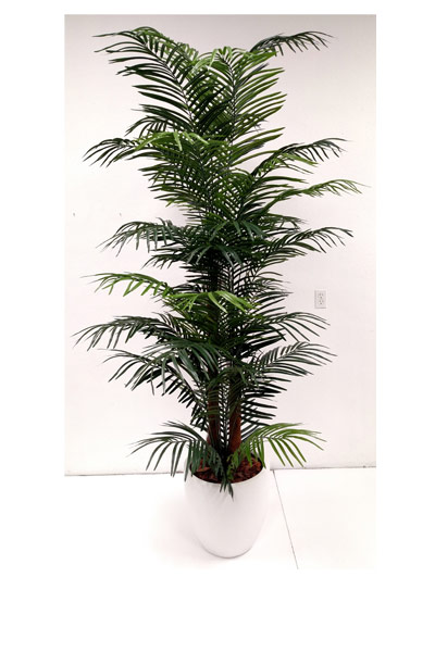7.5-ft. Areca Palm in Basket