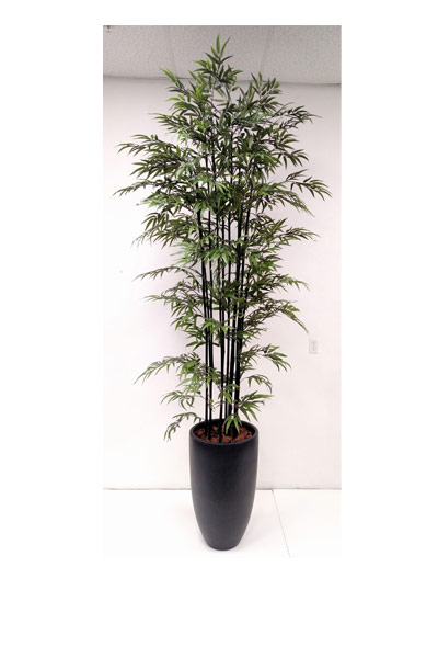 9.5' BLACK BAMBOO IN TALL BLACK MATTE POT