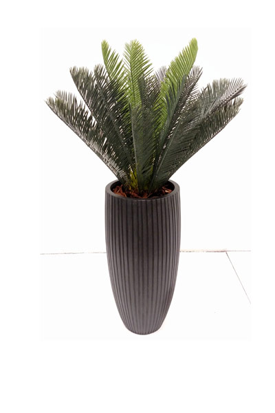 CYCAS PALM IN BLACK RIBBED POT