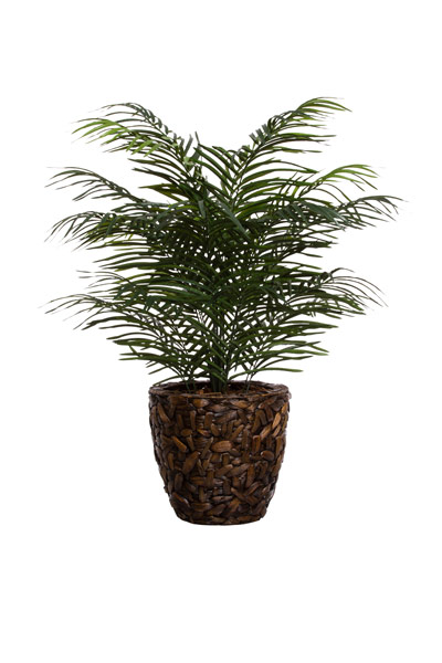 4' ARECA PALM/ BASKET