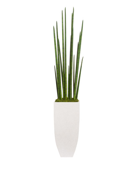LARGE SNAKE PLANT IN WHITE TERRAZZO SQUARE