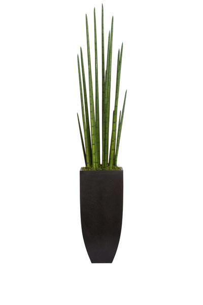 LARGE SNAKE PLANT IN BLACK TERRAZZO SQUARE