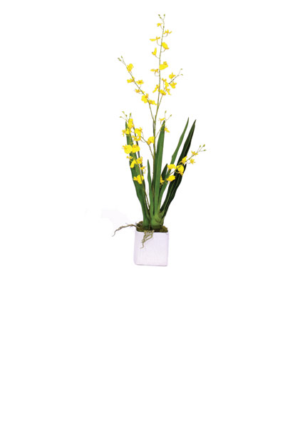 Yellow Oncidium / White Container