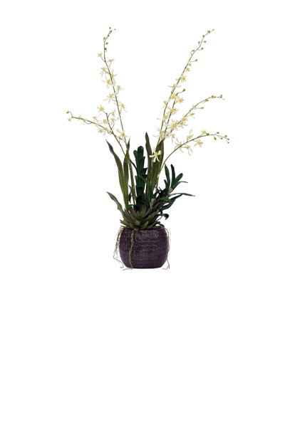 Cream James Story Orchid / Black Bowl
