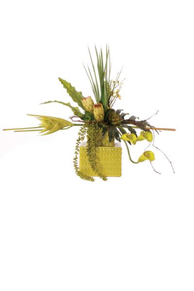 Green Tropical / calla / Protea