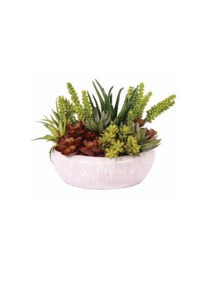 Lg Mixed Succelent / Wht Bowl
