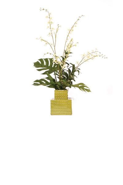 Cream Vanda Orcid / Tower Vase
