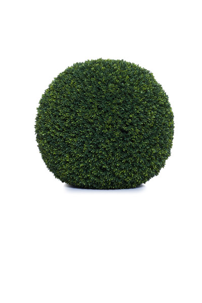 24' LOOSE MINI BOXWOOD BALL