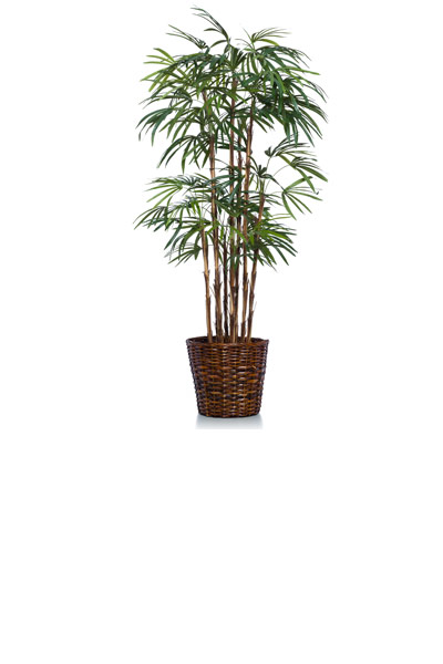 5.5' LADY FINGER PALM/BASKET